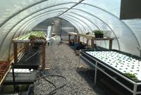 greenhouse-rainy-day_200px